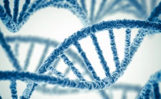 Arti Keragaman Genetik Dalam Biologi