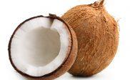 pengertian kelapa,manfaat,ciri,proses dan produk