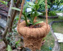 keterampilan dari sabut kelapa